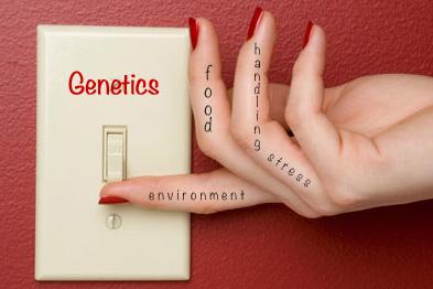 Genetic Light Switch_edited-1