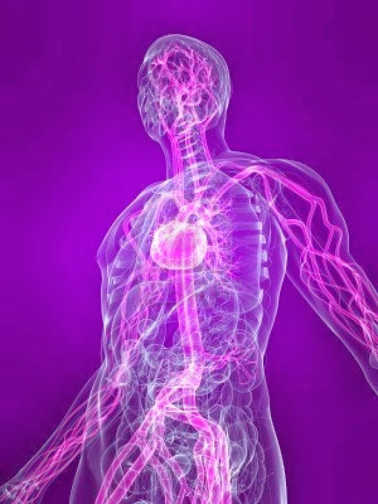 transparent-human-body-with-highlighted-vascular-system_61